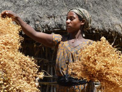A chickpea farmer in Ethiopia.