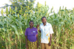 Mr Fidel Yameogo and his wife in their field with improved sorghum variety. Photo: M Magassa, ICRISAT