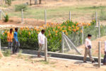 ICRISAT scientists and locals of Mentapally walk past a wastewater treatment plant in the village. The wetland was constructed as part of a CSR initiative of REC Limited.