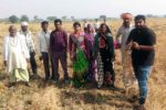 Farmers in a chickpea field affected by dry rot root disease in Madhya Pradesh, along with Devashish Chobe, PhD scholar, ICRISAT. Photo: ICRISAT
