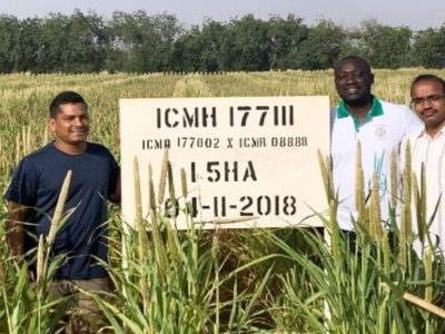 Prakash Gangashetty (L) with pearl millet hybrid ICMH 17711. Photo: ICRISAT