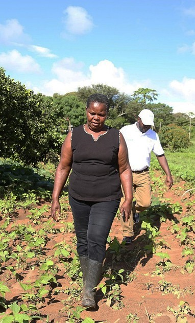 Ms. Phyllis Nduva in her green grams farm. Photo: ICRISAT