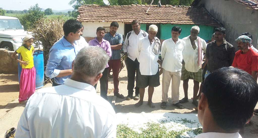 Dr Rathod demonstrating silage making for livestock feeding at Kadabagatti village. Photo: ICRISAT