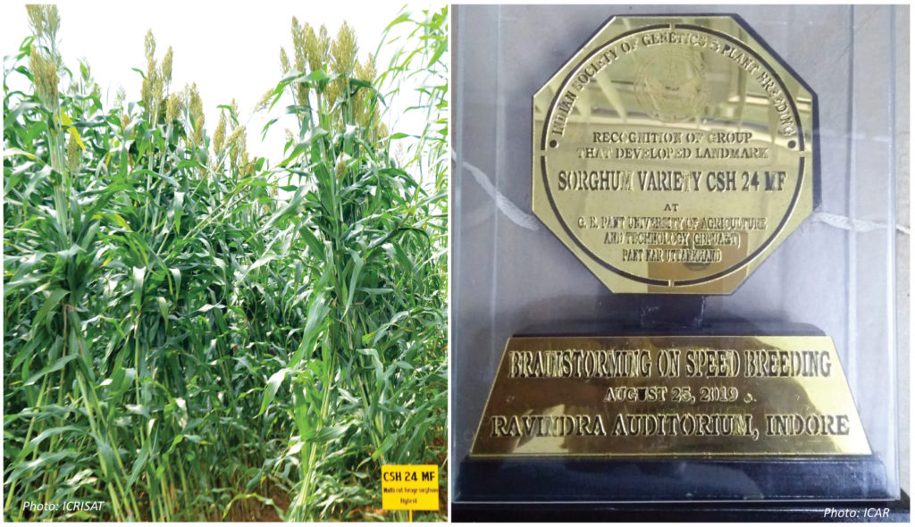 (L) Forage sorghum hybrid CSH 24 MF. (R) Memento presented in recognition of development of the hybrid.