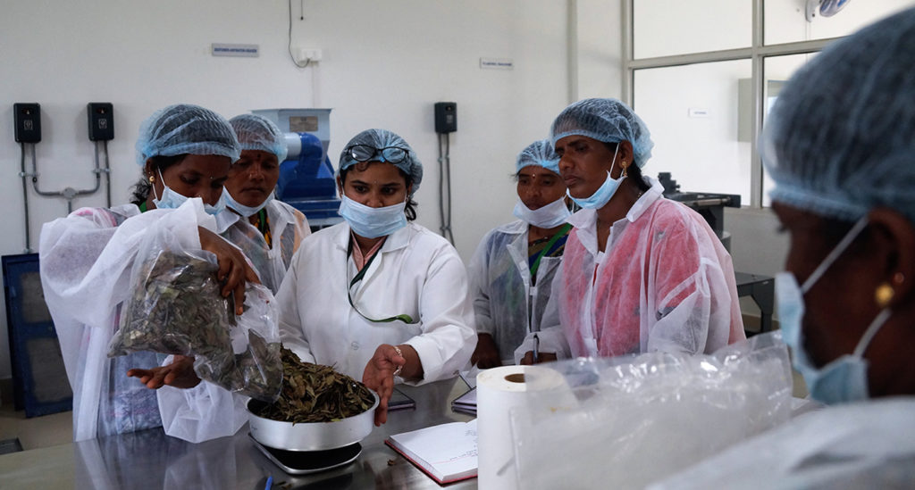 Women farmers receive hands-on training at ICRISAT. Photo: AIP, ICRISAT