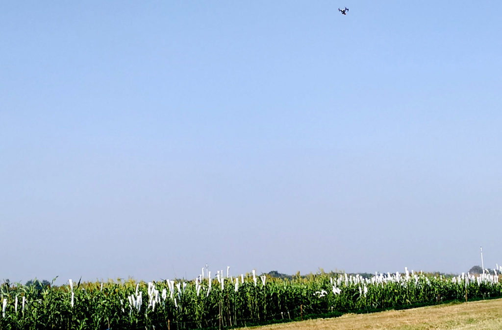 A drone making passes over a field to determine plant traits. Photos: C Sunita, ICRISAT