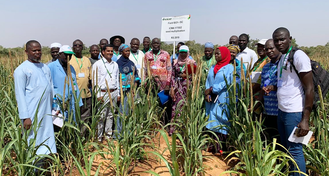 Participants from private seed companies of Niger, Nigeria, Mali and Burkina Faso in hybrid seed parent ICMA 177002 multiplication plot at ICRISAT re search station, Sadore, Niger. Photo: PI Gangashetty, ICRISAT