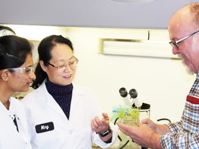 Rasika Aher with Bill Gordon-Kamm and Ning Wang, reviewing progress on pearl millet transformation. Photo: J Gaffney, Corteva Agriscience