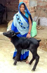 Farmer Malti Pateria with the young calf. Photo: BISLD