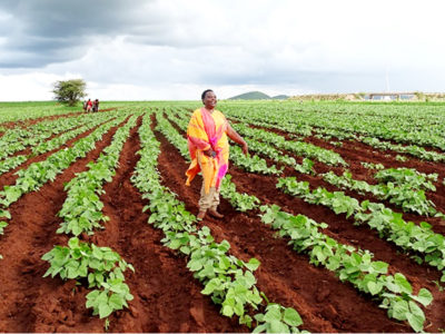 Farmer Betty Bondo in her field. Photo: ICRISAT
