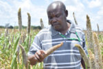 ICRISAT senior researcher Henry Ojulong explains pearl millet seed production.