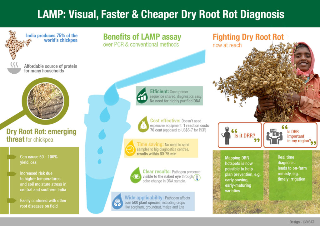 LAMP: Visual, faster & Cheaper Dry Root Rot Diagnosis