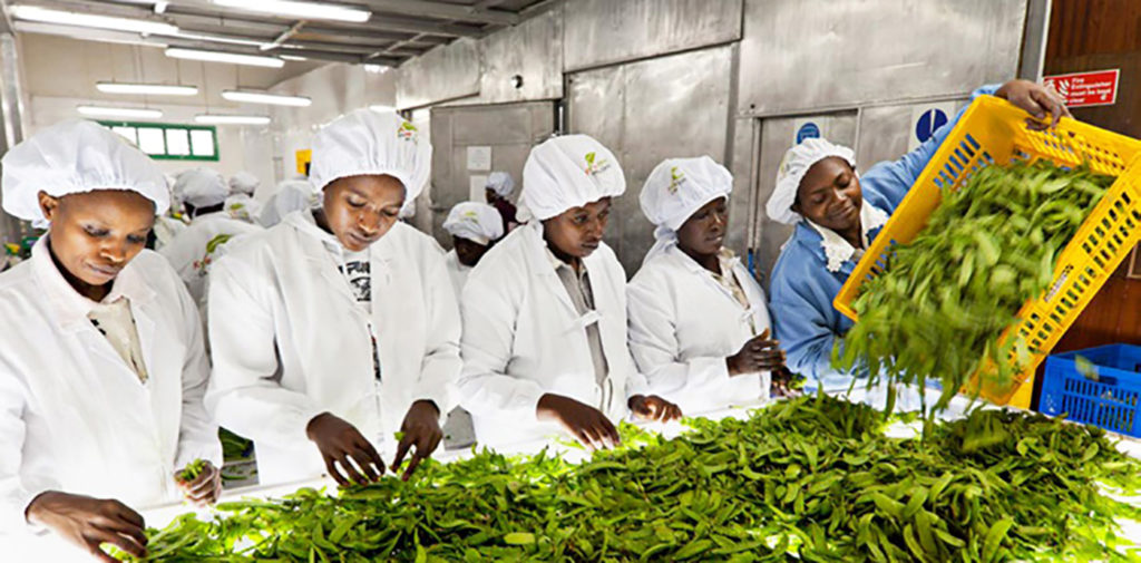 Image from the report. Photo: IFPRI