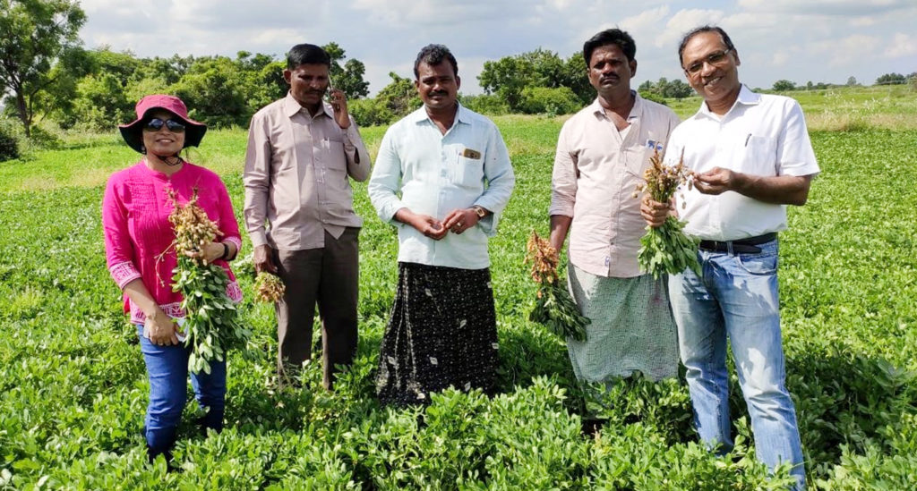 Strengthening the groundnut seed system through rural seed business entrepreneurs. Photo: Jaya Rao, ICRISAT