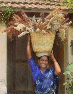 A woman farmer carries soghum.