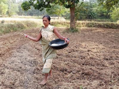 A farmer applies micronutrients to the soil in Nabarangpur district, Odisha. Photo: ICRISAT