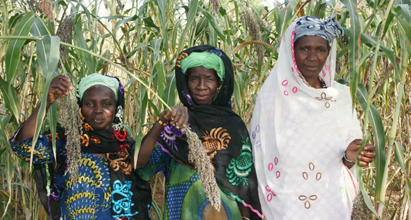 Farmers in a sorghum field in Sikasso, Mali. Photo: ICRISAT