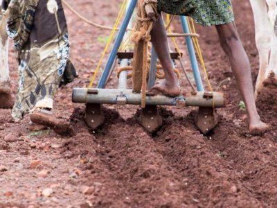 A farmer ploughs his field in Kurnool, Andhra Pradesh. Photo: P Srujan, ICRISAT