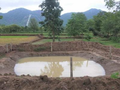 Farmer Pabitra Majhi's farm in Ranibahal village, Kalahandi district, Odisha. Photos: ICRISAT Development Center