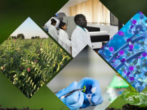 Collage shows Genetic Gains work from lab to field.