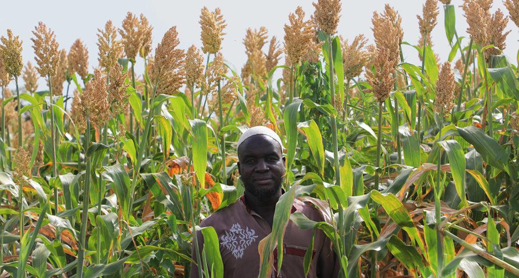 Mr Hamado Bougoumpiga in his Soubatimi field. Photo: M. Magassa, ICRISAT