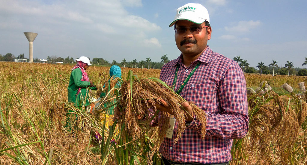 Dr Vetriventhan in a little millet field at ICRISAT. Photo: Venugopal R, ICRISAT
