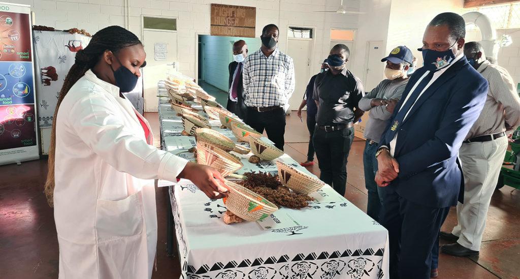 ICRISAT staff show the Minister different crop varieties. Photo: ICRISAT