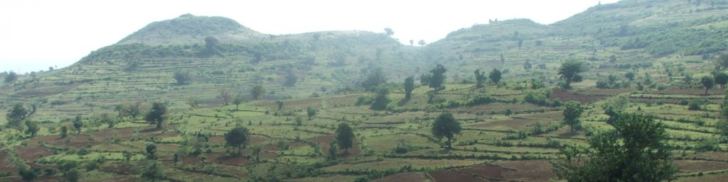 Bunds along the landscape stabilized with vegetative hedgerows. Photo: Dr Gizaw Desta, ICRISAT,