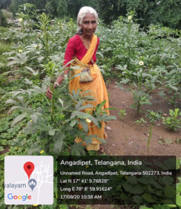 A woman farmer tends to her nutri-garden at the AB InBev- ICRISAT watershed, Sangareddy district.