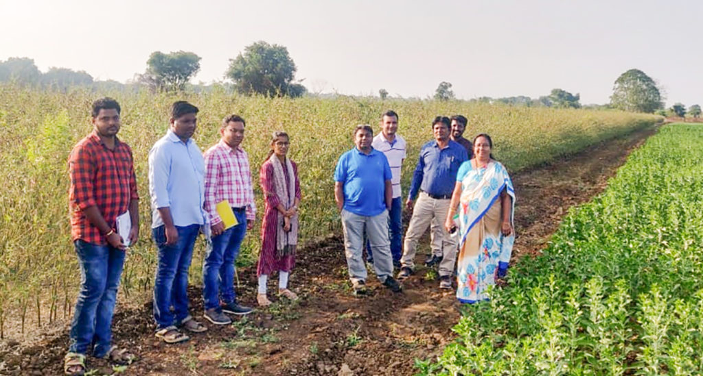 Researchers from ARS Tandur, IIPR Kanpur and ICRISAT monitoring progress in collaborative projects. Photo: C Sudhakar, ARS-Tandur