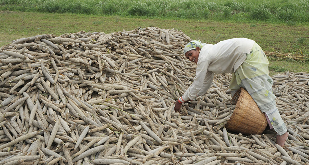 File photo of a pearl millet farmer. Photo: ICRISAT